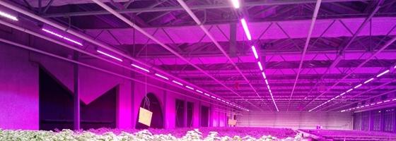 Ingenium leert bij over landbouw van de toekomst